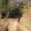 Bridleway into Pitt Wood