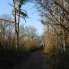 Bridleway through Pitt Wood