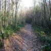Leafy track in Pitt Wood