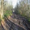Muddy track in Pitt Wood
