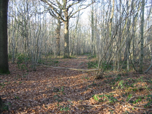 Track through Pitt Wood