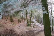 Wintry Woodland