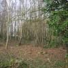 Centrax Wood