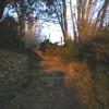 Bridleway just above Crows Nest village