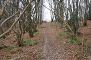 Footpath through Gigmore Wood