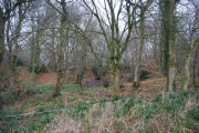A boggy hollow in a small woodland near Darvell