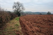 Hedge and Tree by Ploughed Field