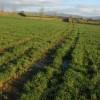 Footpath to Holling's Farm
