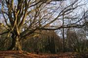 Woodland near Glaziers Forge