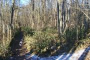 Deadman Wood