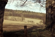 Ladybank Wood 1972