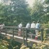 Footbridge over the Bollin at Thorns Green