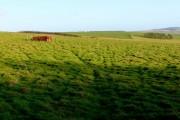 Fields near Litton Cheney