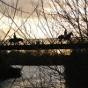 Attenborough Nature Reserve Horses on Barton Bridge