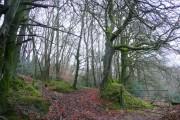 Grammarcombe Wood 1