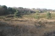 Woodland fringe, Aylesbeare Common