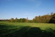 First flush of Autumn near Hitch Copse Farm