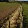 Fenced field boundary, Dinedor