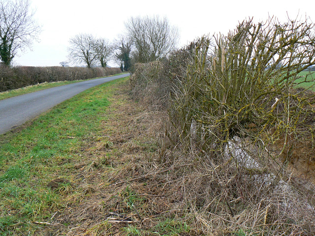 Lane, verge and ditch, near Marston Meysey