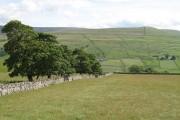A Weardale hay meadow