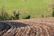 Farmland near Pinn