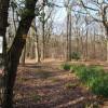 Blean Woods Nature Reserve, West Blean Woods