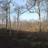 Cleared woods, West Blean Wood