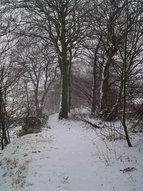 A snowy walk through the trees
