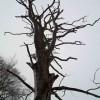 Batman's tree looks dead