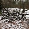 Wood pile in Coed y Wenallt