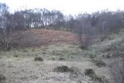 Birch woods, Srath Ascaig