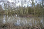 Flooded forest by the River Medway