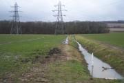Stream from Stalks Wood