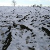 Ploughed Field with Snow and Boot Tracks