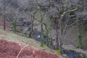 Woodland and Nant Fsgair