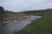 River Otter at Dotton