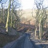 Clyne Woods in Winter