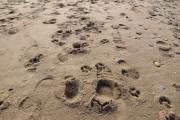 Foot and Dogprints on Kilnsea Beach