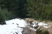 In Bellever woodland