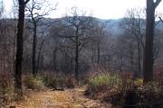 Darwell Wood