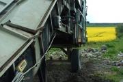 Oil Seed Rape Harvester?