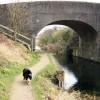 Bridge 5, Wendover Arm, Drayton Beauchamp, looking East