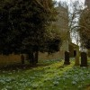 Snowdrops in profusion in Kirk Bramwith churchyard
