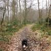 Footpath in High Scrubs Wood