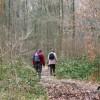 Walking along the Chiltern Way in High Scrubs Wood