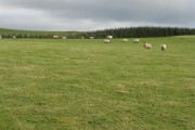 Pasture in the Meldons