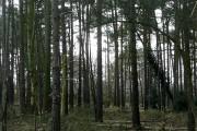 Padworth Common