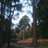 Mixed woodland,Craigbui  Wood