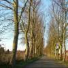Avenue leading to Leiston Cemetery