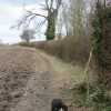 The Shire Hedge – Marking the County Boundary at Tring
